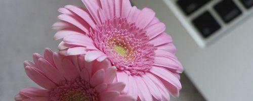 flower-3121972_1920
